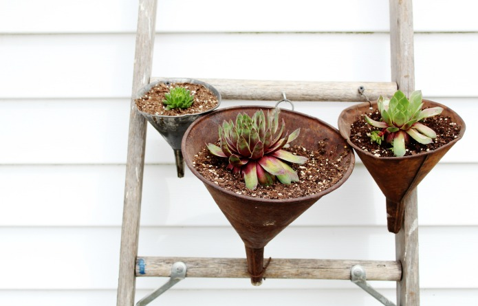 Turn an old ladder into a vertical succulent garden using vintage rusty funnels as planters | www.knickoftime.net
