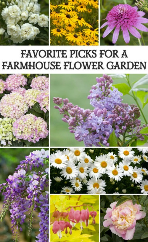 favorite picks for a farmhouse flower garden featured at Talk of the Town at Knick of Time | www.knickoftime.net