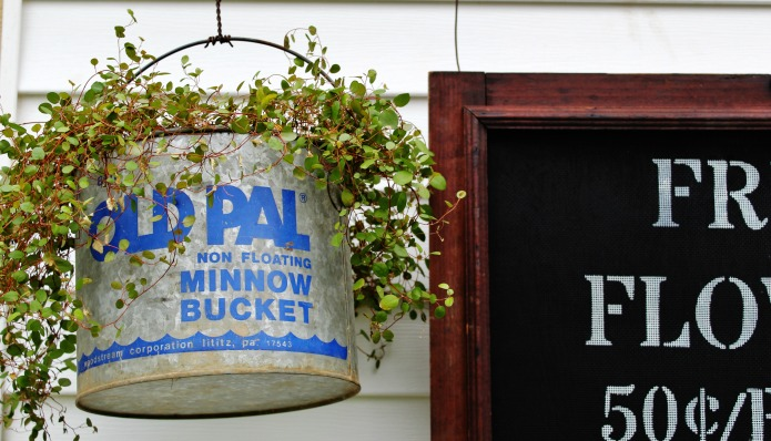 Vintage galvanized minnow bucket used as farmhouse style hanging plant pot | www.knickoftime.net