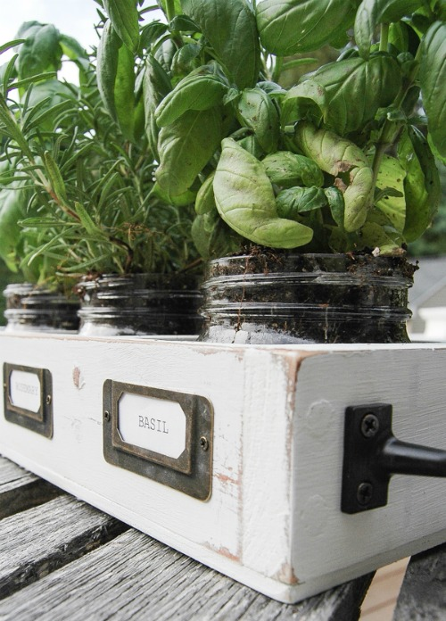 Farmhouse Indoor Herb Garden Made from an OutdatedThrift StoreShelf | Upcycled & Repurosed Thrift Store Makeovers