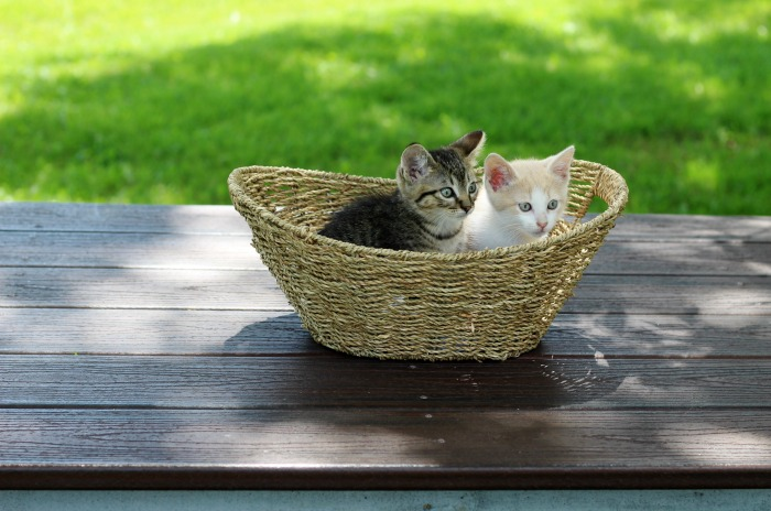 Meet Jack & Sawyer | The story of Adopting Lost Baby Kittens and watching them grow | www.knickoftime.net