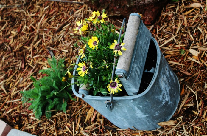 Drill holes in the bottom of an old galvanized mop bucket to use as a farmhouse style flower planter | www.knickoftime.net