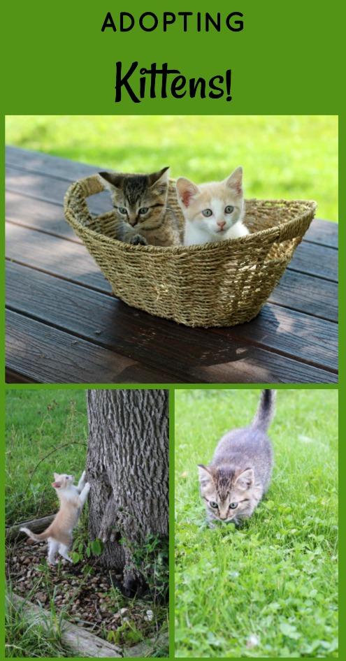 Adopting baby kittens | www. knickoftime.net