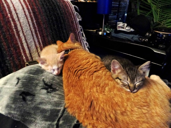 Our female cat totally adopted to little lost kittens as her own | www.knickoftime.net