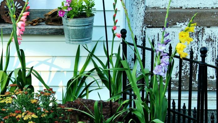 Gladiolus in a farmhouse guest house junk flower garden | www.knickoftime.net