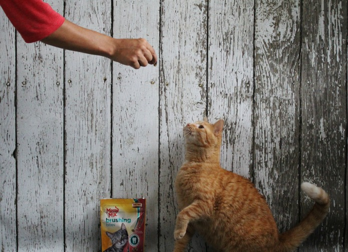 Teaching cats to sit on command with treats | www.knickoftime.net
