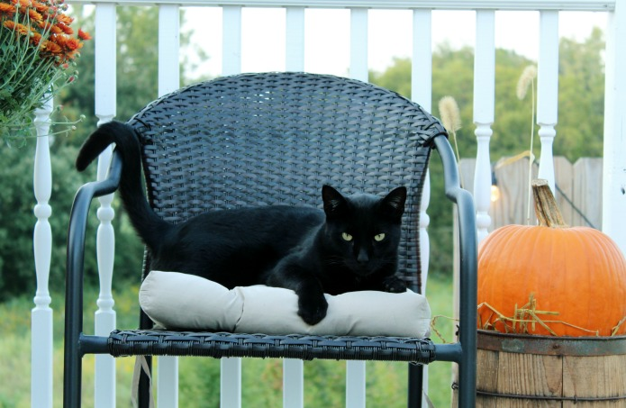 Black cat on a fall decorated porch | www.knickoftime.net