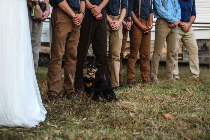 Outdoor wedding ring bearer dog photos by @abbysummitttran