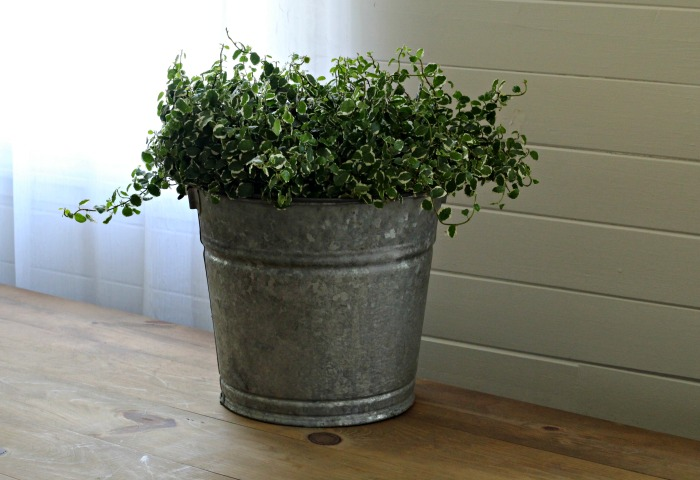 Vintage galvanized bucket farmhouse style planter #knickoftime #farmhousestyle #galvanized #planter | www.knickoftime.net