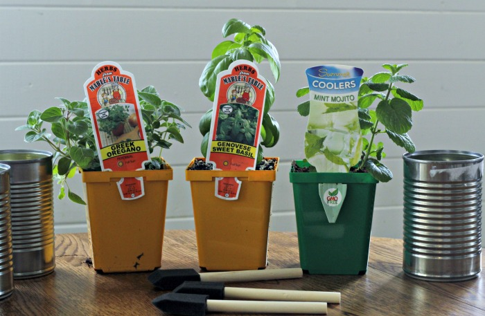 Patriotic Tin Can Indoor Kitchen Herb Planters | www.knickoftime.net