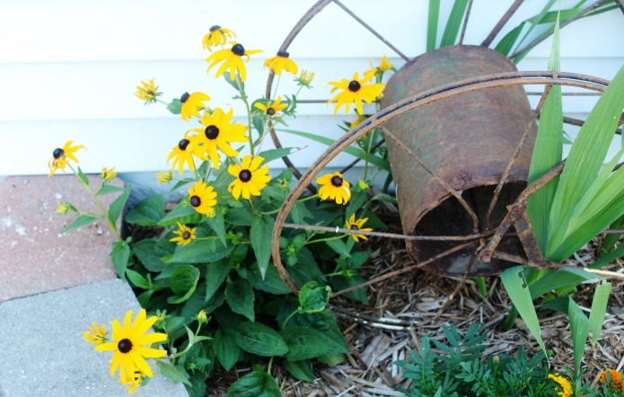 Black eyed Susan and salvaged junk garden decor | www.knickoftime.net