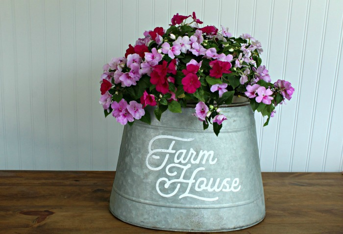 Impatiens grown in Galvanized Farmhouse Style Bucket Planter | knickoftime.net