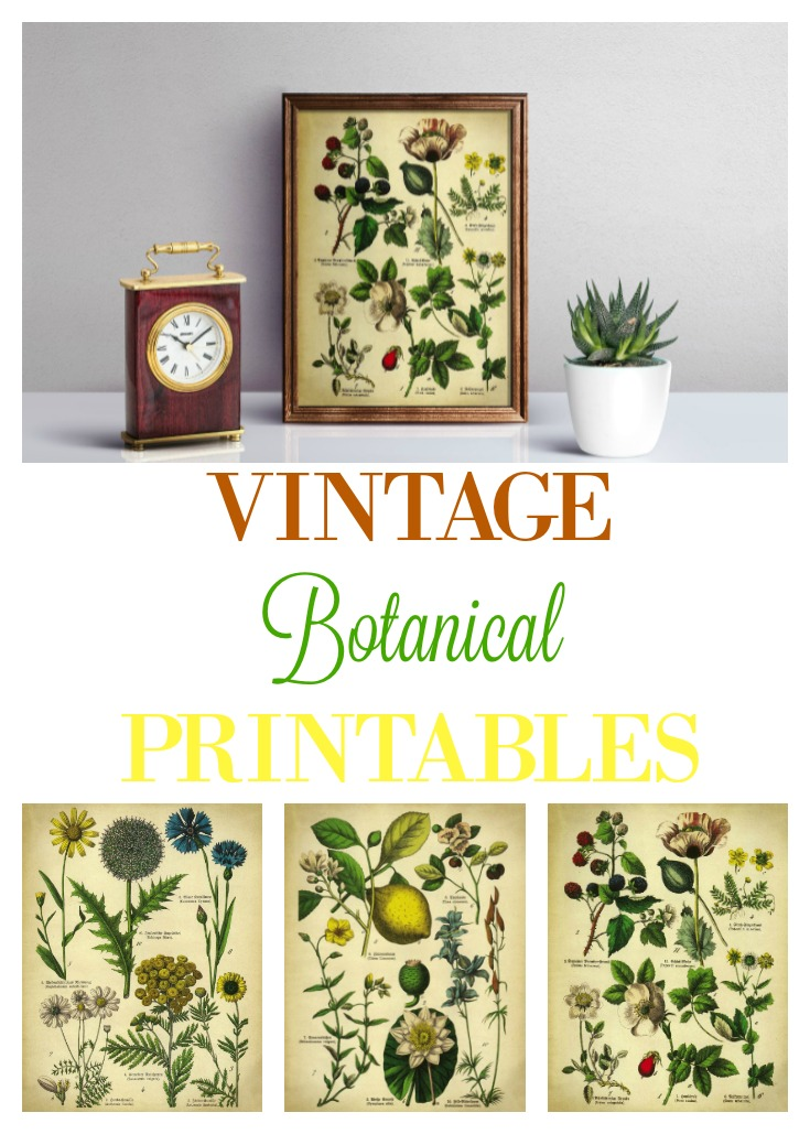 Botanical Printables for Wall Art, Framed Prints, Home Decor | knickoftime.net