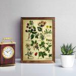 Free Vintage Botanical Printables: Instant Artwork