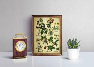Framed Vintage Botanical Printables | knickoftime.net