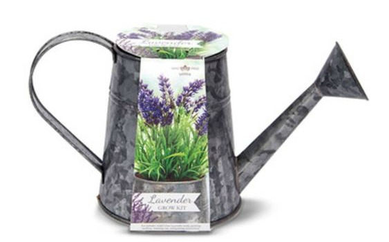 galvanized watering can lavender growing kit