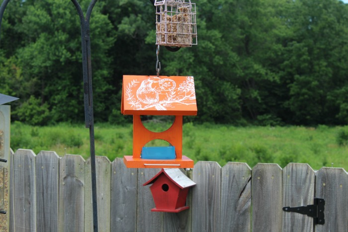 DIY wood oriole bird house feeder