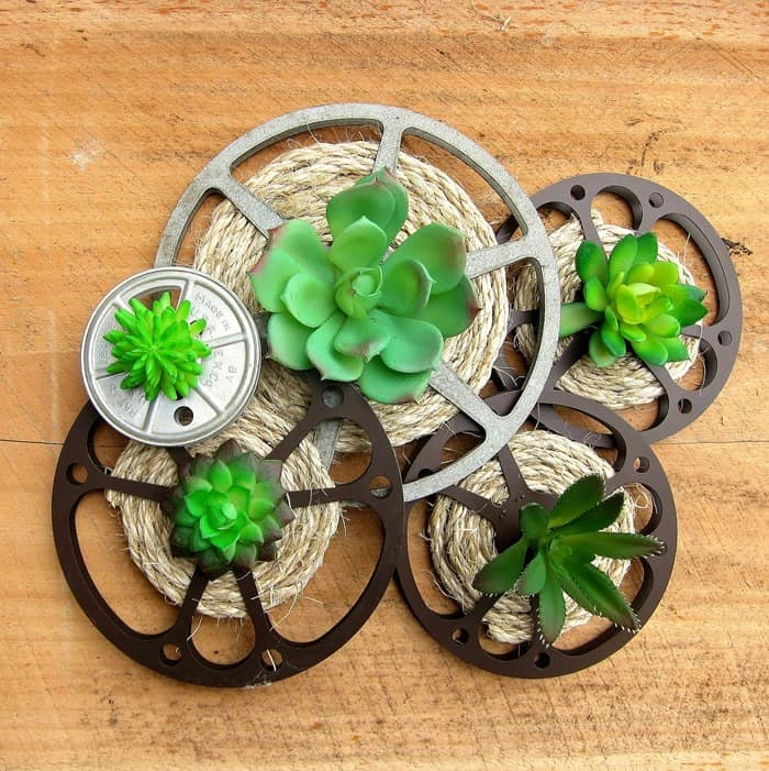 DIY Idea For Old Movie Reels Succulent Plant Display