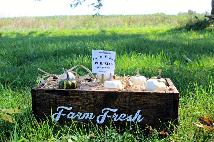 Farmhouse Fall Decor Rustic Wood Pumpkin Patch Box